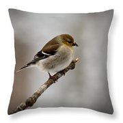 Male American Golden Finch Throw Pillow