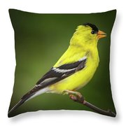 Male American Golden Finch On Twig Throw Pillow