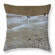 Male And Female Bufflehead Ducks  Throw Pillow