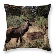 Male And Female Mountain Nyala Throw Pillow