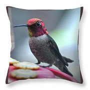 Male Anna's Hummingbird On Feeder Perch Throw Pillow