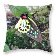 Male Birdwing Butterfly Throw Pillow