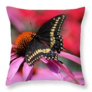 Male Black Swallowtail Butterfly On Echinacea Plant Throw Pillow