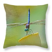 Male Blue Dasher Dragonfly Throw Pillow