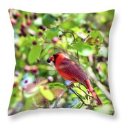 Male Cardinal And His Berry Throw Pillow by Kerri Farley