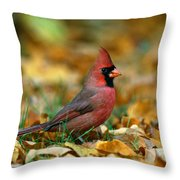 Male Cardinal Cardinalis Cardinalis Throw Pillow