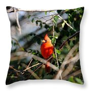 Male Cardinal II Throw Pillow