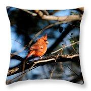 Male Cardinal IIi Throw Pillow