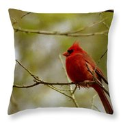 Male Cardnial Throw Pillow