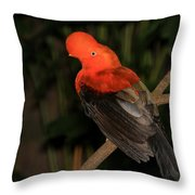 Male Cock Of The Rock Throw Pillow