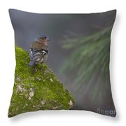 Male Common Chaffinch  Throw Pillow