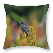 Male Cowbird Feasts On Milo In Shiloh National Military Park, Tennessee Throw Pillow