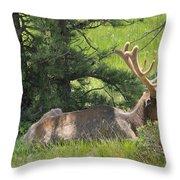 D10271-male Elk 2  Throw Pillow