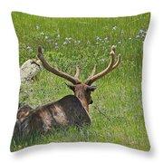 D10270-male Elk  Throw Pillow