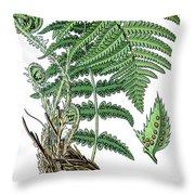 male fern, Dryopteris filix-mas Throw Pillow