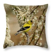 Male Finch In Blossoms Throw Pillow