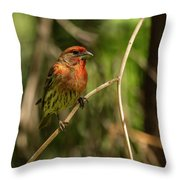 Male Finch In Red Plumage Throw Pillow