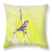 Male Finch On Bare Branch Throw Pillow