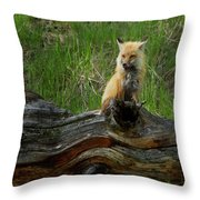 Male Fox-signed   #3569 Throw Pillow