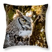 Male Great Horned Owl Portrait Throw Pillow