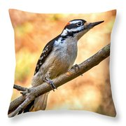 Male Hairy Woodpecker Throw Pillow
