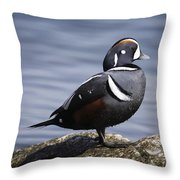 Male Harlequin Throw Pillow
