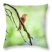 Male House Finch Out On A Limb Throw Pillow