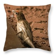 Male House Finch V10 Throw Pillow