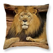 Male Lion Looking Right At Me Throw Pillow