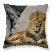 Male Lion Resting In The Warm Sunshine Throw Pillow