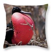 Magnificient Frigatebird  Throw Pillow