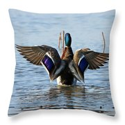 Male Mallard In Glorious Color  7515 Throw Pillow