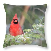 Male Northern Cardinal 2 Throw Pillow