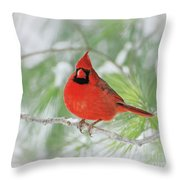 Male Northern Cardinal In Winter - 2 Throw Pillow