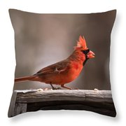 Male Northern Cardinal Winter New Jersey  Throw Pillow