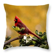 Male Northern Red Cardinal Throw Pillow