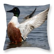 Male Northern Shoveler Wing Flapping Throw Pillow