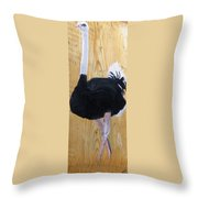 Male Ostrich On Wood Throw Pillow