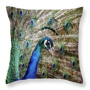 Male Peacock Displaying Throw Pillow