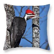Male Pileated Woodpecker 6340 Throw Pillow