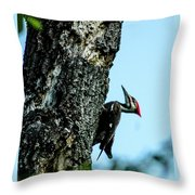 Male Pileated Woodpecker Throw Pillow