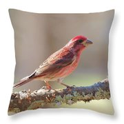 Male Purple Finch Throw Pillow