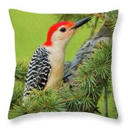 Male Red Bellied Woodpecker In A Tree Throw Pillow