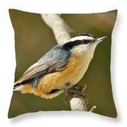 Male Red Breasted Nuthatch 2151 Throw Pillow