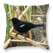 Male Red Winged Blackbird Throw Pillow