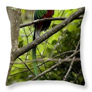 Male Resplendent Quetzal Throw Pillow by Roy Toft