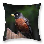 Male Robin Throw Pillow