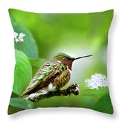 Male Ruby-throated Hummingbird At Rest Throw Pillow