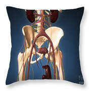 Male Skeleton With Ureter System Throw Pillow