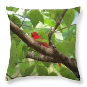 Male Summer Tanager Throw Pillow